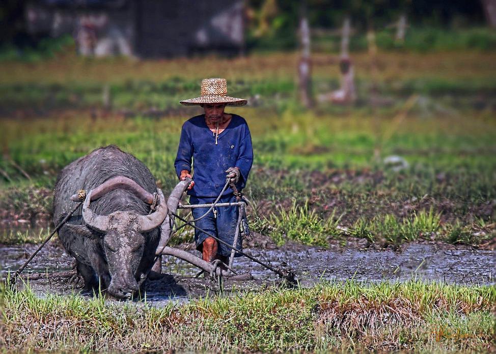 Rice tariffication to impoverish Filipino farmers more, Congress ...