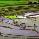 By Shubert Ciencia from Nueva Ecija, Philippines - Nagacadan Rice Terraces (Kiangan, Ifugao), CC BY 2.0, https://commons.wikimedia.org/w/index.php?curid=4405840