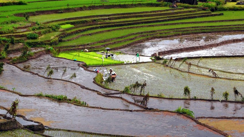 By Shubert Ciencia from Nueva Ecija, Philippines - Nagacadan Rice Terraces (Kiangan, Ifugao), CC BY 2.0, https://commons.wikimedia.org/w/index.php?curid=4405840